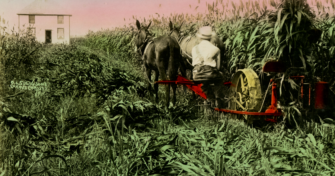 A farmer driving a horse drawn wheat harvester.